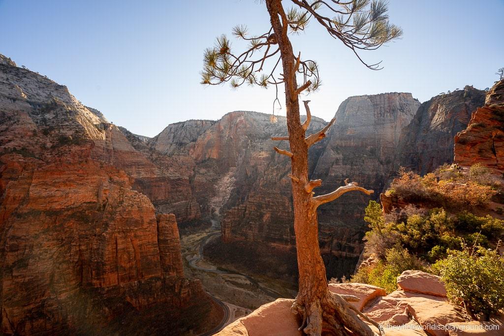 Scout Lookout Zion National Park