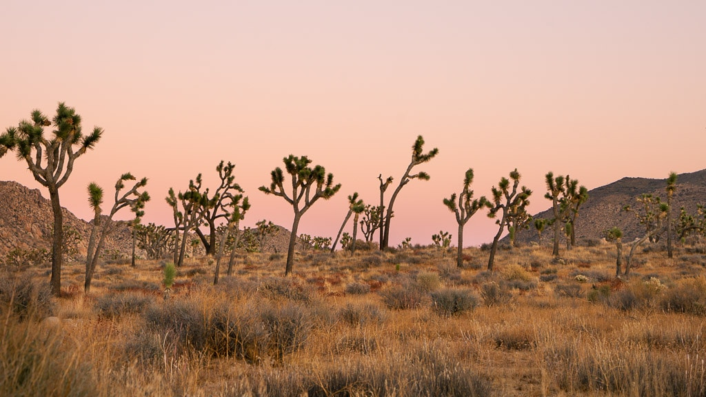 Joshua Tree National Park in Winter