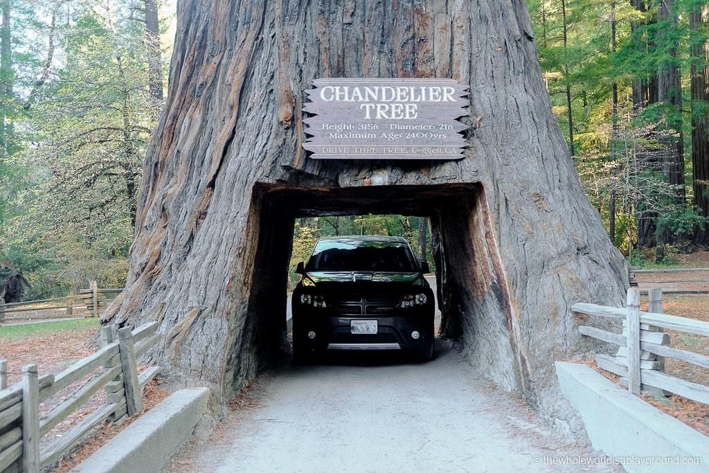 Drive Through Redwood Tree California